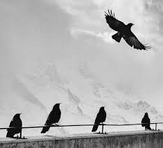 """Spektakl """"Ptaki"""" w MOK-u"""