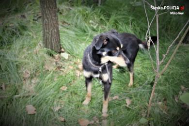 Przywiązany do drzewa i zostawiony na pewną śmierć! Kobieta znalazła porzuconego psa